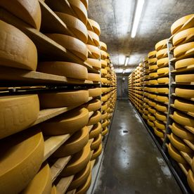 galerie-photos-laiterie-fromagerie-du-paquier-gruyere-fribourg
